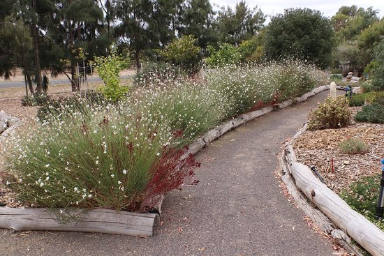 Yarrabee Native Garden: The walkway