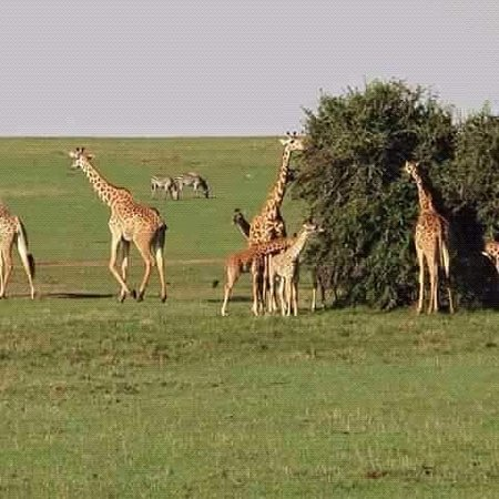 Golden Rwanda Safaris: Wildlife is one if activities that makes our lives much better