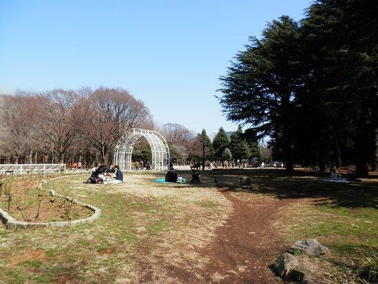 สวนโยโยกิ: Yoyogi park