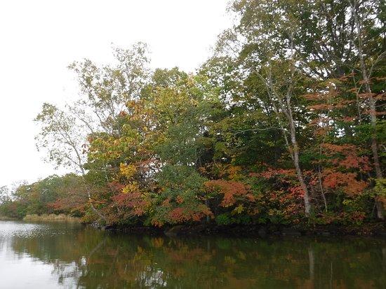 Onuma Quasi-National Park : 10月前半ですが若干色づいていました