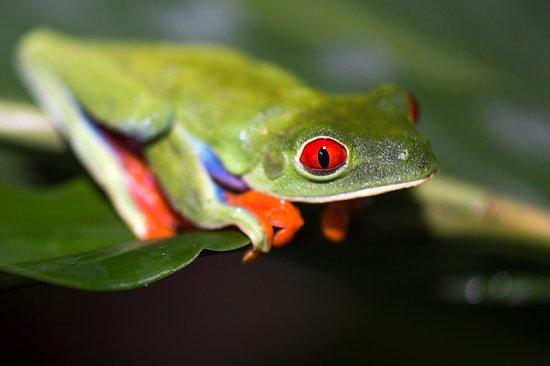 Chachagua, Kostaryka: Enjoy our Night Hikes!