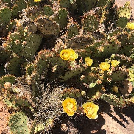 Canyonlands National Park ภาพถ่าย