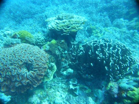 Apo Island Marine Reserve: Coraux