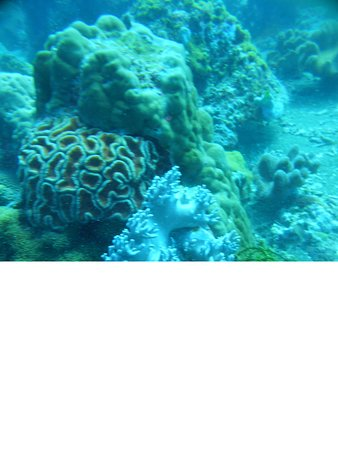 Apo Island Marine Reserve: Jolie Promenade sr les Coraux d'Apo Island
