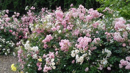 Musée de l'Ancien Éveche : fleurs du jardin