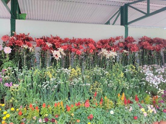 Botanical Gardens: Botanical garden Flowers