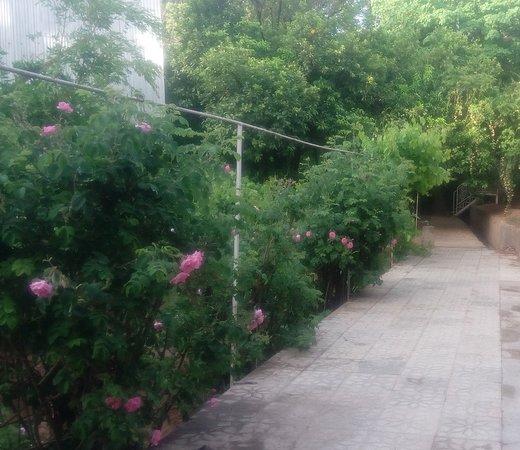 A beatiful Garden