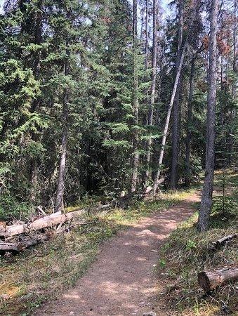 Pyramid Lake Resort : Trails are all around the resort.