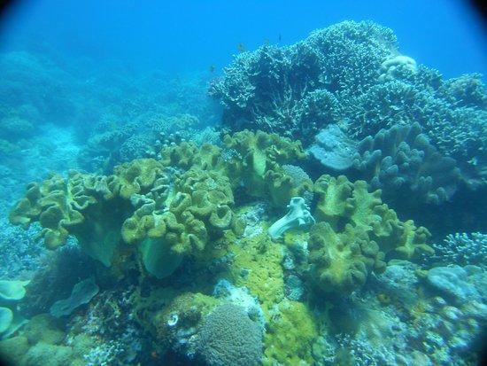 Apo Island Marine Reserve: Ma très Belle 300 ème Plongée à Boluarte