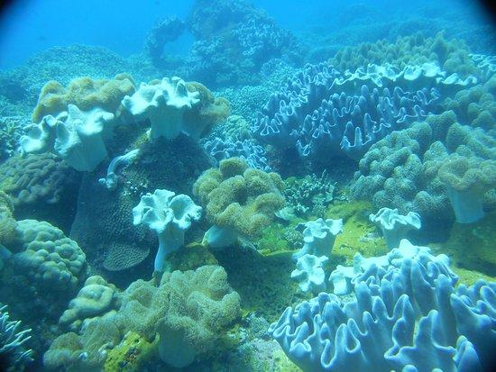 Apo Island Marine Reserve: Belle Plongée à Boluarte pour la 500 ème de mon mari