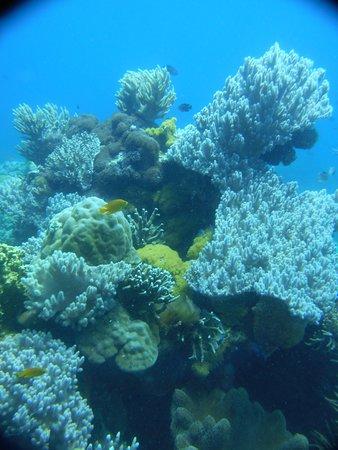 Apo Island Marine Reserve: Très belle promenade sur les Coraux avec Guido