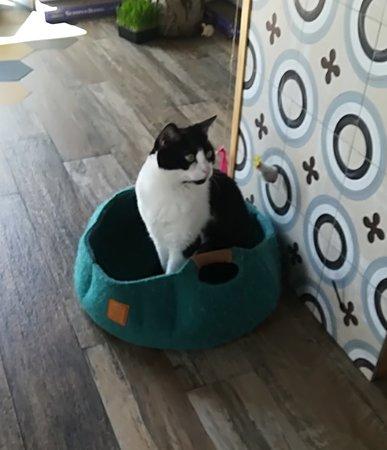 Romeow Cat Bistrot照片