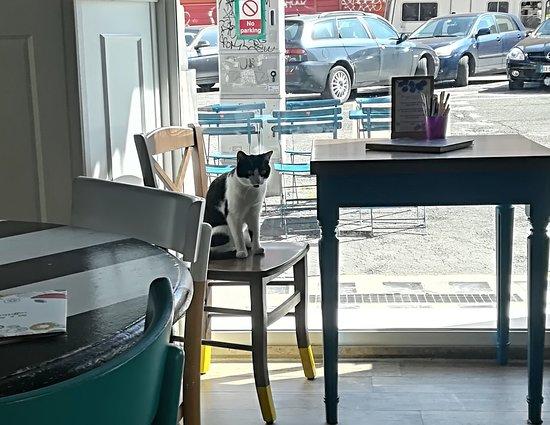 Romeow Cat Bistrot-bild