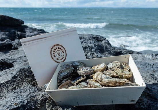 New Quay, Irlandia: Pick your own fresh oysters and learn how to shuck them from a professional - Traveling Spoon
