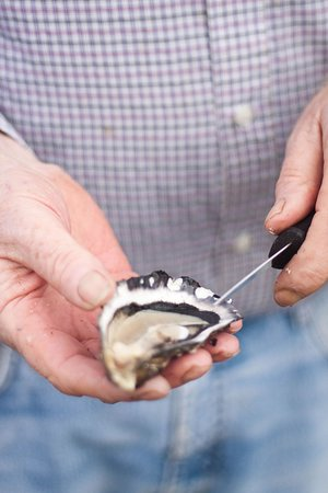 New Quay, Irlandia: Shuck fresh oysters on a family-owned oyster trading company by Flaggy Shore - Traveling Spoon
