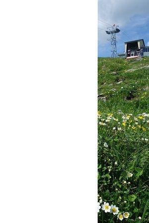 Aescher, Berggasthaus: Bergstation - Blumen wohin man sieht