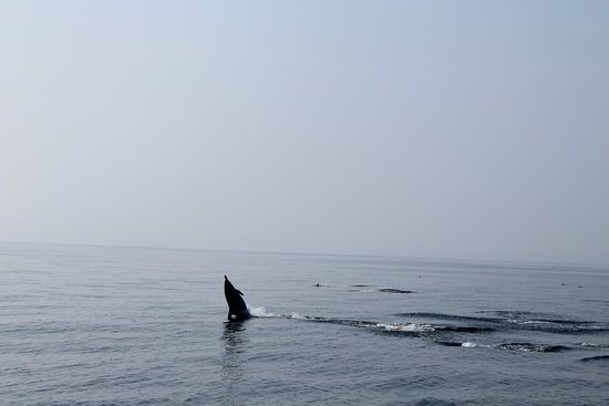 Whale Watch West Cork Photo