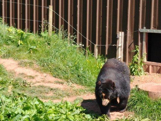 South Lakes Safari Zoo Photo