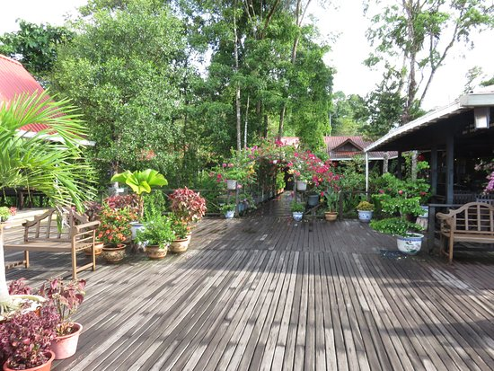 Abai Jungle Lodge: Lovely boardwalk