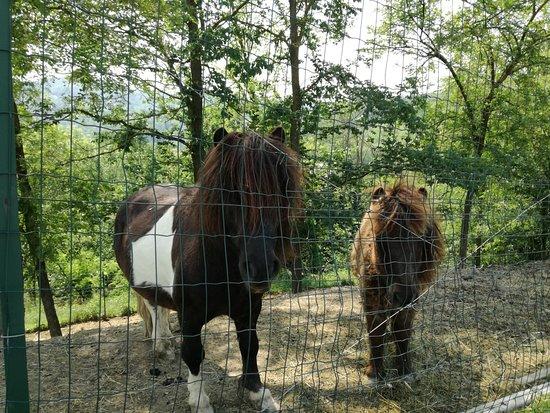 Cereseto, Italy: il papà pony con il figliolo più grande