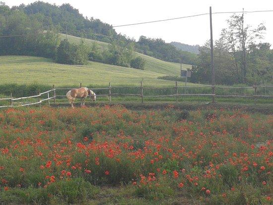 Piozzano, Italy: IMG_20180526_184946_large.jpg