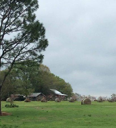 Mississippi: Mitchell's peanut farm