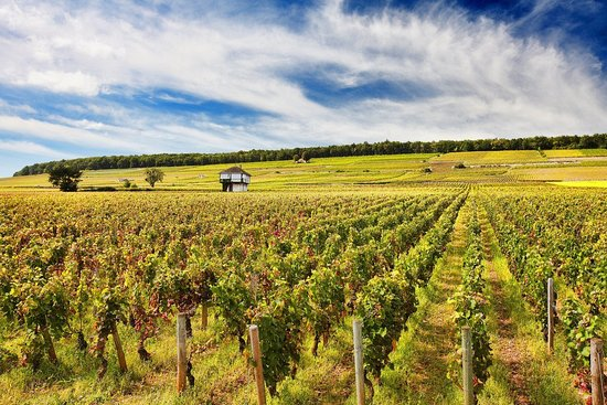 Burgundia Tour: Wine tours to Burgundy wine country.