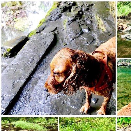 Ystradfellte, UK: Dogs enjoying Four Waterfalls