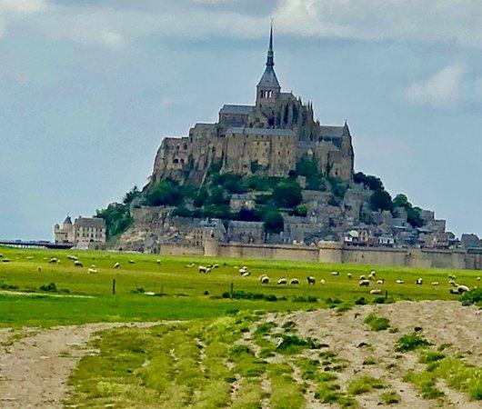 Ardevon, France: Sheep Grazing Below Mont Saint Michel
