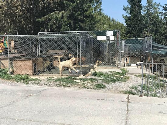 Kyrenia Animal Rescue: dogs