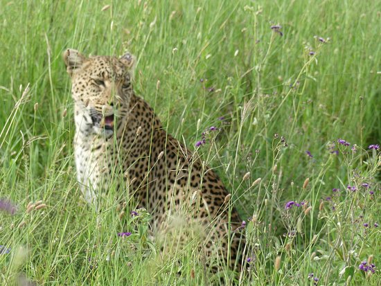 Africa Joy Tours - Day Tours: You would never go to zoo after this tour!
