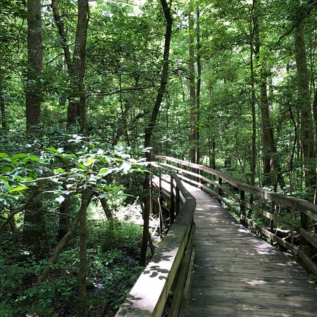 Congaree National Park ภาพถ่าย