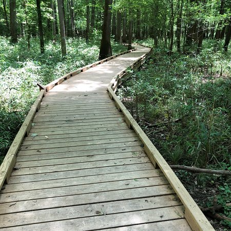 Congaree National Park Photo