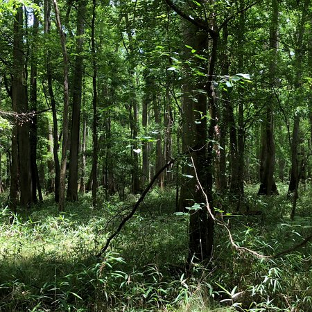 Congaree National Park: Nice