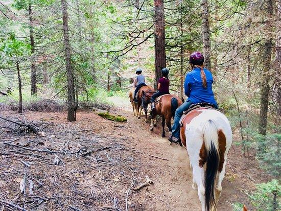 Yosemite Trails Horseback Adventures : Riding back down the mountain
