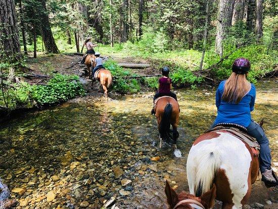 Yosemite Trails Horseback Adventures : Cutting across a stream