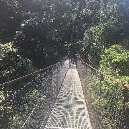 Mistico Arenal Hanging Bridges Park ภาพถ่าย