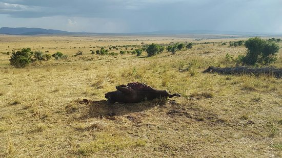 写真マサイマラ国立保護区枚