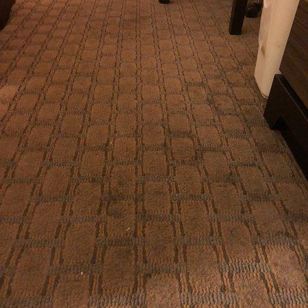 Quality Inn & Suites Near Fairgrounds Ybor City Photo