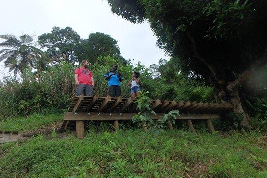 Go Local Fiji Transfers & Tours: Go Local Fiji Tours