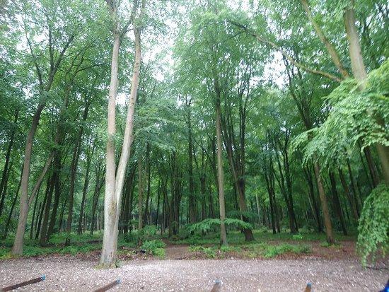 Blackwood Forest Foto