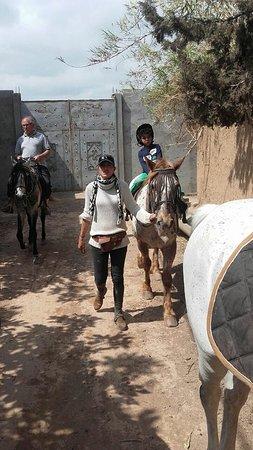 La Ferme Equestre de la Roseraie : balade encadrée pour les touts petits et débutants