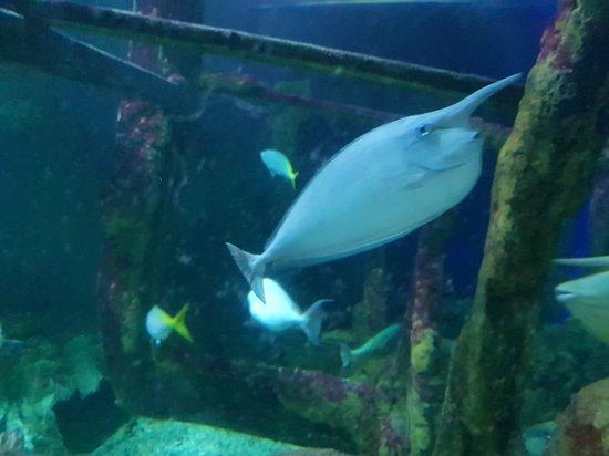 布莱顿海洋馆照片
