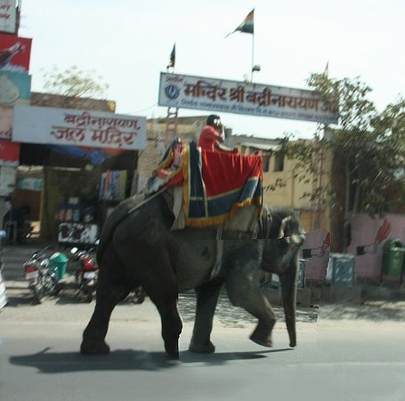 Lords Plaza Jaipur: Take care with traffic. Some drivers are on their phone!