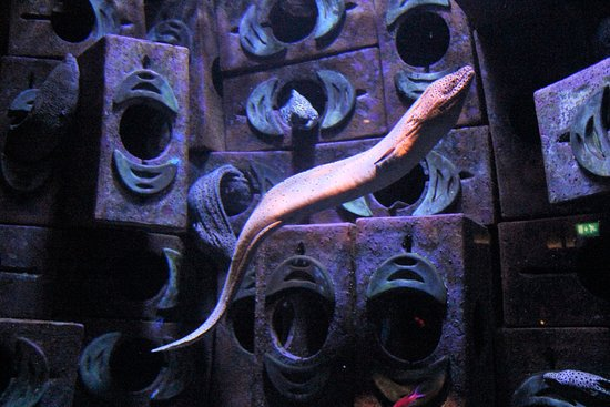 The Lost Chambers Aquarium: Cool Eel