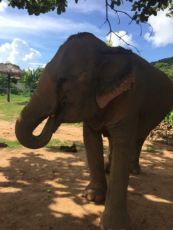 写真Samui Elephant Sanctuary枚