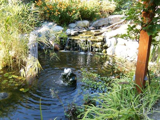 MoonDance Inn: pond