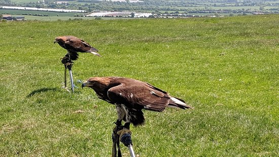 Julianstown, Ireland: Golden Eagles