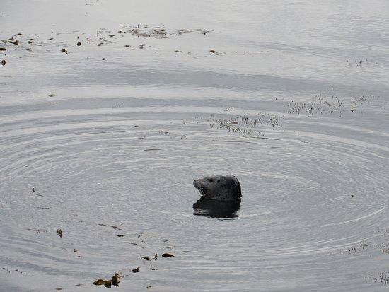 Point Lobos : E também muitas focas aparecem por lá!