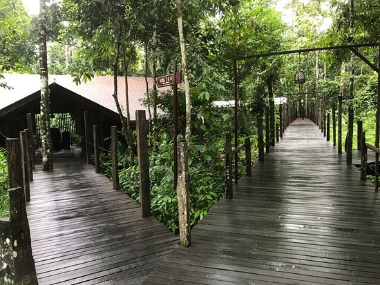 Kinabatangan District, Malasia: The boardwalk and our villa